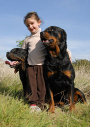 Girl with two Rottweiler puppies