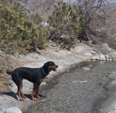 Max by the creek at 7 months