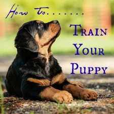 About Dog Food Aggression A Love Of Rottweilers