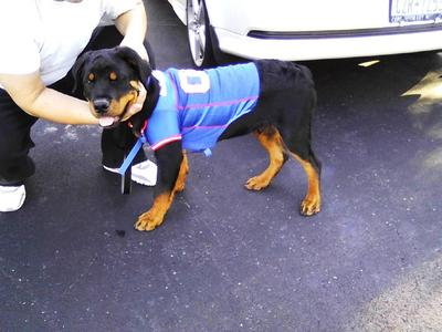 In his Buffalo Bills Jersey