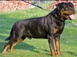 VOM CARNIVOUS KENNEL