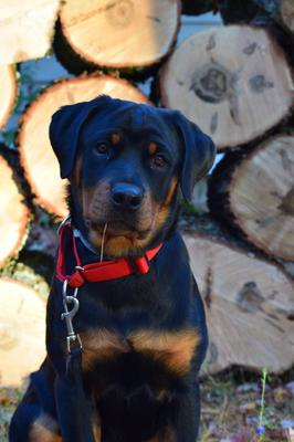Whats The Best Dog For Search And Rescue